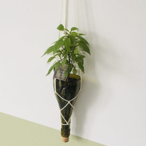 Suspension From Home Ginger Flower
